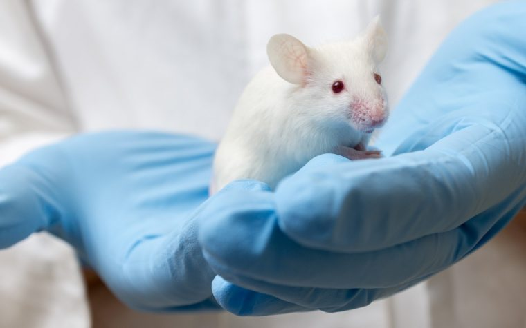 Mouse Study Suggests Benefits of Diabetes Drug in Sjögren's Syndrome
