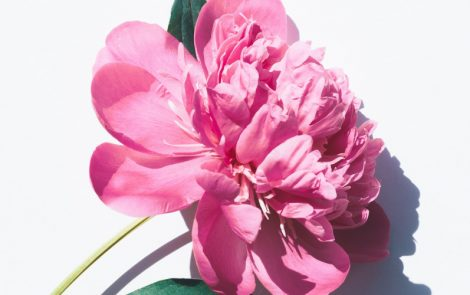 Compound from Peony Eases Symptoms in Sjögren's Patients, Large Chinese Trial Finds